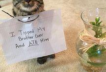 Animal Shame