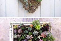 Вертикальное озеленение, суккуленты