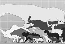 Prehistorické Zvieratá