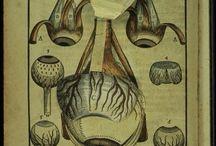 Ophthalmology 1583