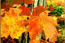 Dulce otoño