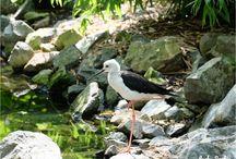 Parc des Oiseaux de Villars-les-Dombes