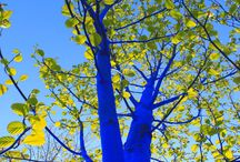 The Blue Trees / My public art installation, The Blue Trees uses art to highlight the issue of global deforestation and to raise awareness of the importance of trees to the environment.