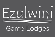 Ezulwini Game Lodges / The Ezulwini Game Lodges are located in the Balule Nature Reserve, which shares unfenced borders with the Kruger National Park in South Africa. It is home to the big five. There are two lodges - Billy's lodge and River lodge. Both are luxurious and offer daily game drives.   Comfort in the heart of the African bush.