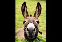 donkey happy birthday