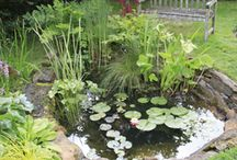 Small ponds