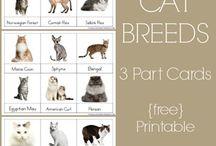 Animals- Cats & Kittens