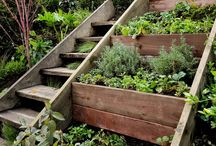 vege and herb garden