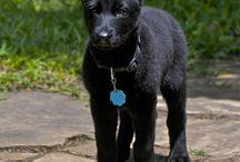 Honden / Leuk