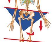 Postura / Allineamento