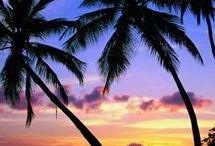 Ocean = Palm Trees / by Stacy Stenersen