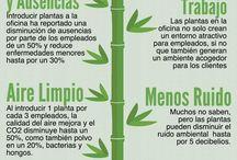 plantas tips