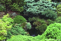 Garden Ideas / by Lori Lewis