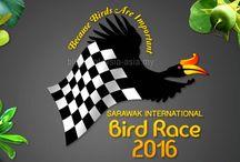 Birds of Sarawak