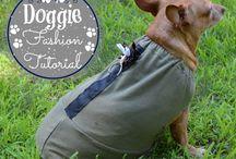 pet fashion / ideas for dressing your pet