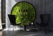 Atmosphy Moss Green Walls