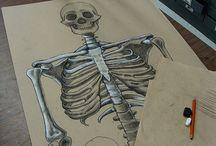 Bones - klas 2