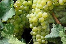 Grape अंगूर् / Grape Fruit / by Mukesh Chakarwarti