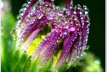 Dew Drops & Rain