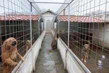 Victory Shelter, Brasov Romania