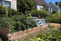Garden central / by Tami Mohr-Jones