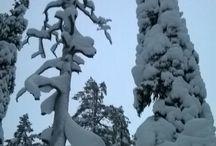 Talven tykkääjä
