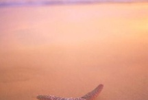"""Starfish / The young man on the beach was not discouraged by the vast number of starfish washed ashore. He went about his work tossing them back to sea. Like the man from the story, Jesus tenderly and lovingly rescued each of us. """"For the Son of Man came to seek and save the lost."""" Luke 19:10"""