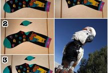 parrot outfits