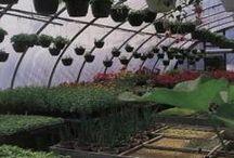 organic strawberry tunnel