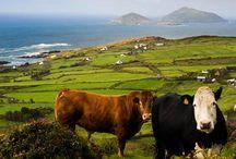 Ireland future vacaton