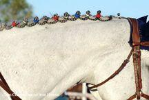 Knoppa häst