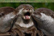 Zvieracie mláďatká