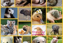 Animal Piccollage