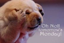 Puppy joke / That what i feel when its Monday