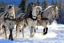 Wild spirit / Horses