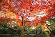 Sanraku no Mori / 三楽の森