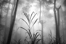 Fog & Mist Photography