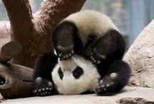 Panda <3 / by Rain