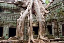 Cambodja / Het toerisme naar Cambodja kwam op gang na de oorlog tussen Vietnam en de Verenigde Staten in de jaren zestig. Vooral Amerikanen en Fransen waren nieuwsgierig naar de landen in Zuid-Oost Azië. Er waren redelijke voorzieningen voor toeristen, met hotels, goed berijdbare wegen en vliegverbindingen.