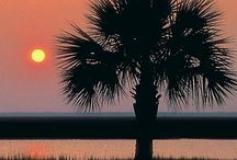 Where I come from......... / Born and raised about 22 miles from Charleston, South Carolina........I don't think I could ever live anywhere else! / by Pamela Bunch
