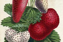 FRUITS in art
