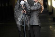 HORSE RIDING ❤️❤️