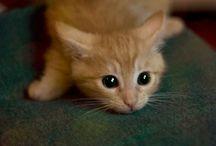 Maddafakka cat