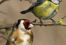 Kuşlar-Birds