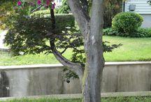 rocaille sous un arbre