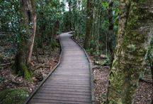 Queensland Rain Forest / God's Creation for our pleasure.