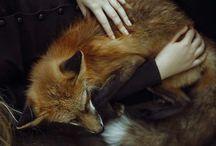 fox ♡♥♡♥