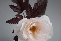 Margaret Merill Rose