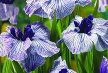 irish flowers japanese