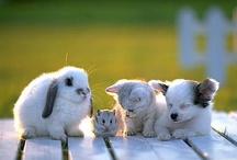 Animal friends / by Manuela Mora